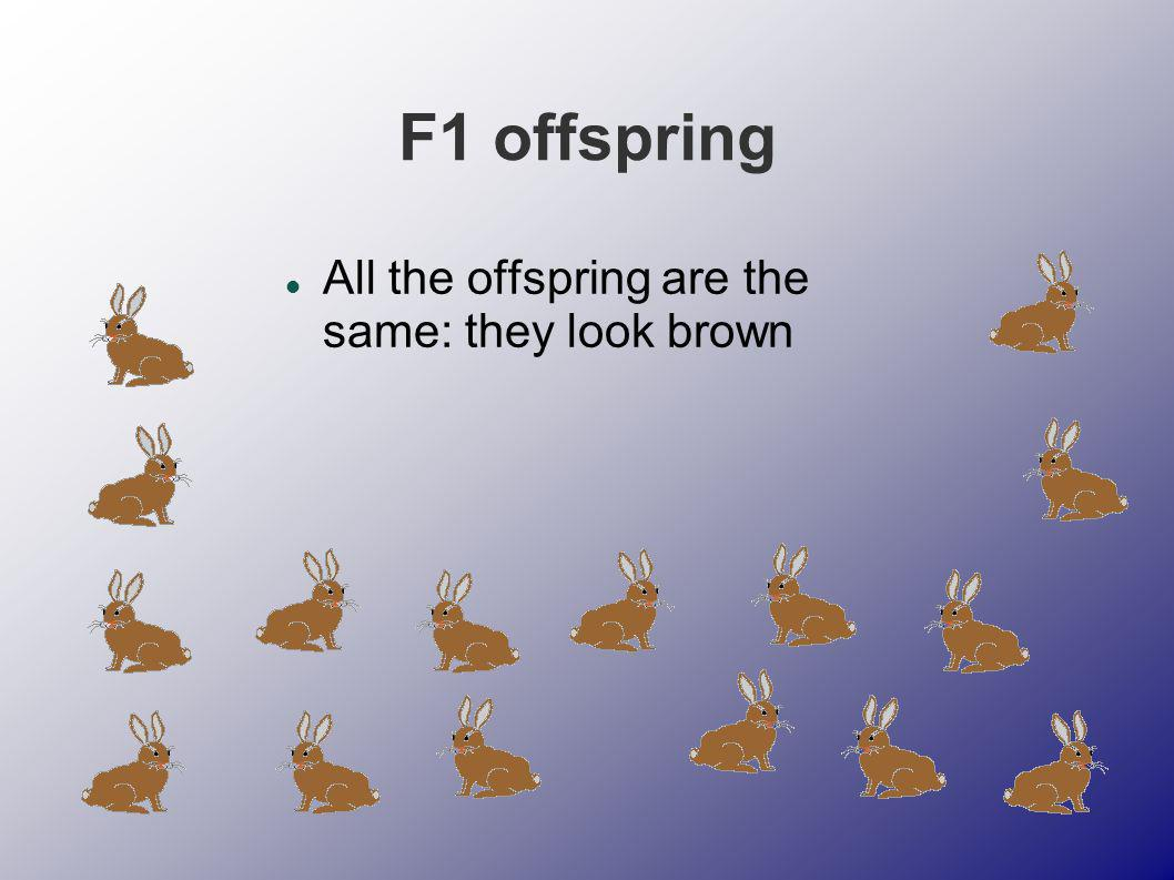 Using F1 offspring as parents If two of these rabbits are allowed to reproduce…