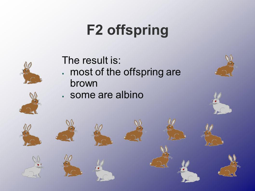 F2 offspring The result is: most of the offspring are brown some are albino