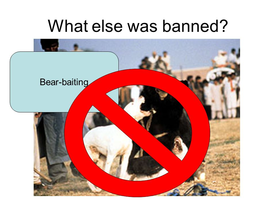 What else was banned Bear-baiting