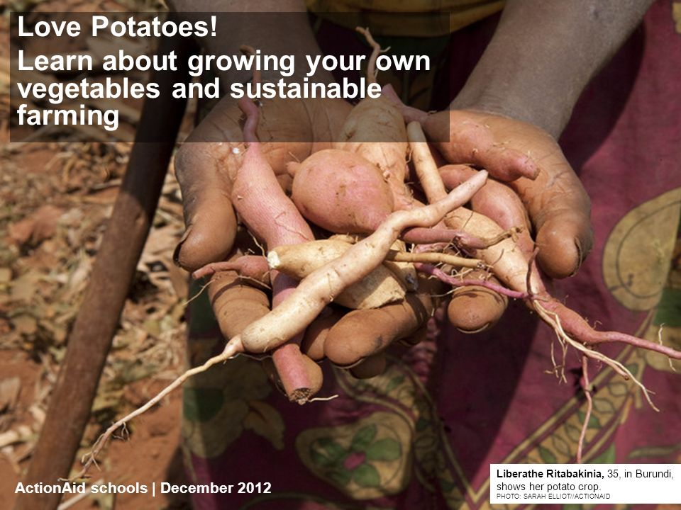 ActionAid schools | DATE | 1 Love Potatoes.