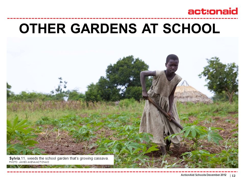 ActionAid schools | DATE | 12 OTHER GARDENS AT SCHOOL Sylvia,11, weeds the school garden thats growing cassava. PHOTO: JAMES AKENA/ACTIONAID ActionAid