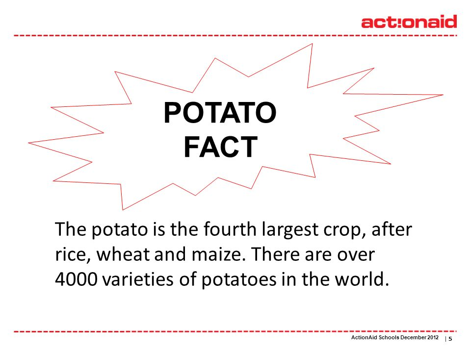 ActionAid schools | DATE | 5 The potato is the fourth largest crop, after rice, wheat and maize. There are over 4000 varieties of potatoes in the worl