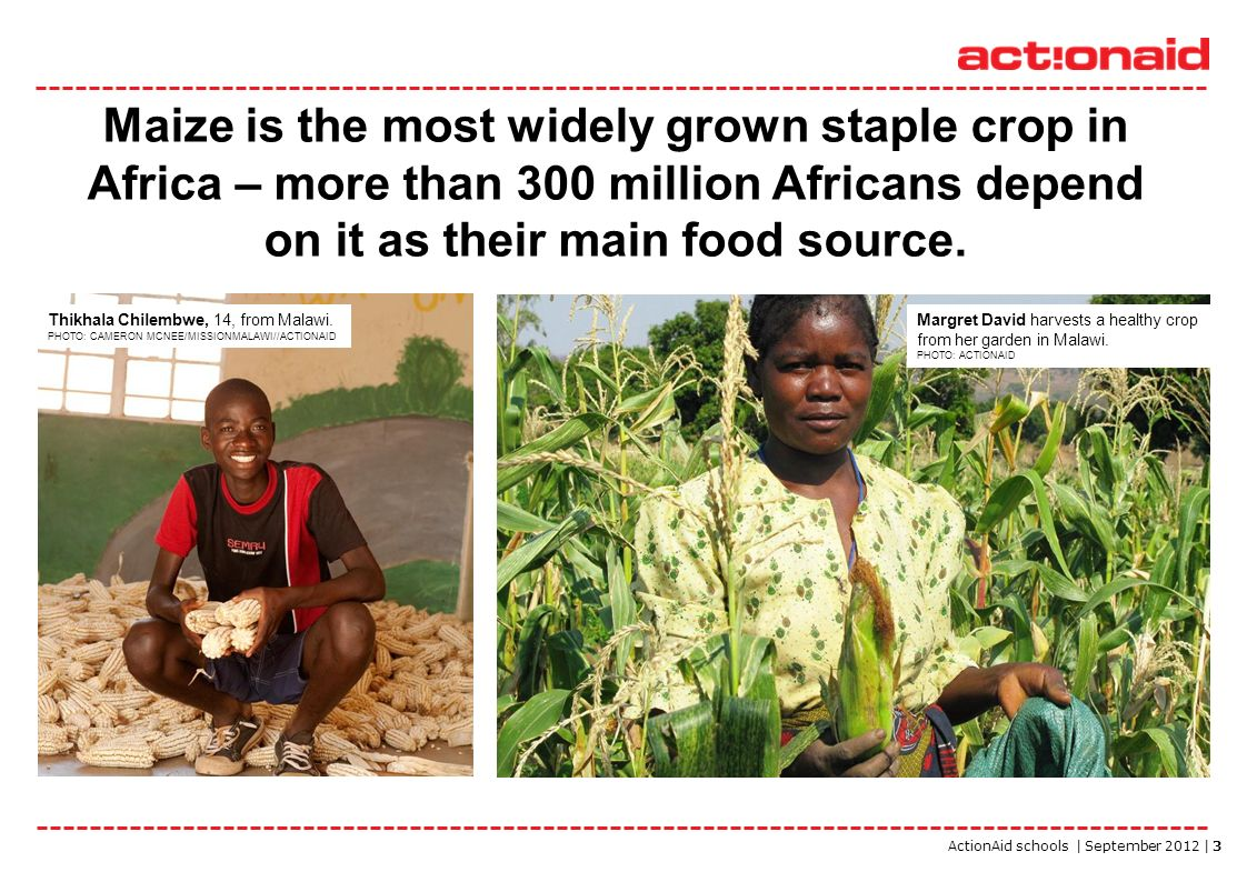 ActionAid schools | September 2012 | 3 Maize is the most widely grown staple crop in Africa – more than 300 million Africans depend on it as their mai