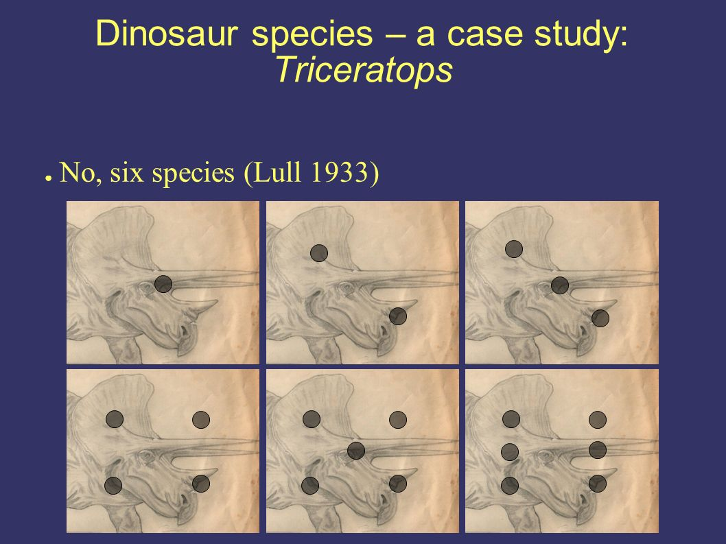 Dinosaur species – a case study: Triceratops No, six species (Lull 1933)
