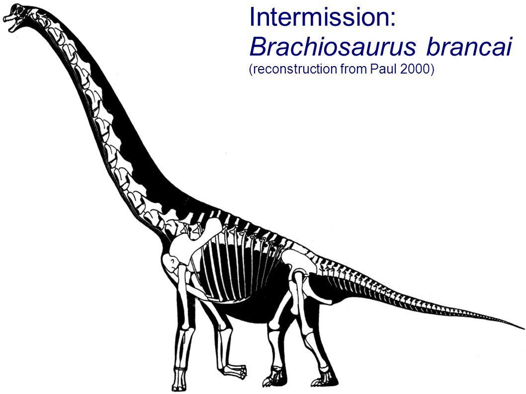 Intermission: Brachiosaurus brancai (reconstruction from Paul 2000)