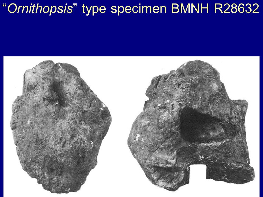 Ornithopsis type specimen BMNH R28632