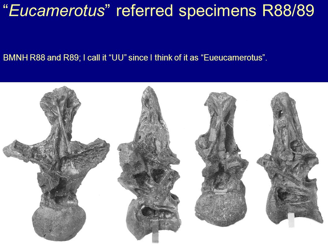 Eucamerotus referred specimens R88/89 BMNH R88 and R89; I call it UU since I think of it as Eueucamerotus.
