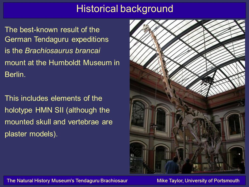 Historical background The Natural History Museum s Tendaguru BrachiosaurMike Taylor, University of Portsmouth The best-known result of the German Tendaguru expeditions is the Brachiosaurus brancai mount at the Humboldt Museum in Berlin.
