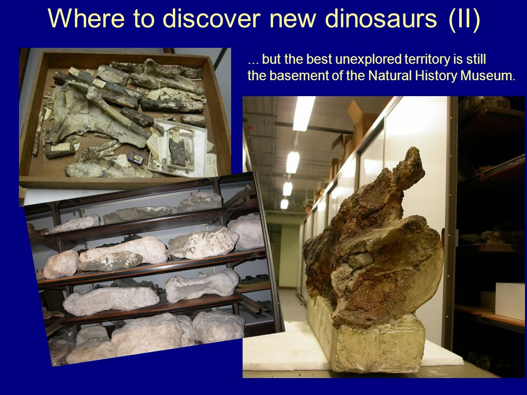 Where to discover new dinosaurs (II)... but the best unexplored territory is still the basement of the Natural History Museum.