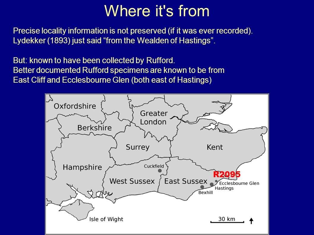 Where it's from Precise locality information is not preserved (if it was ever recorded). Lydekker (1893) just said from the Wealden of Hastings. But: