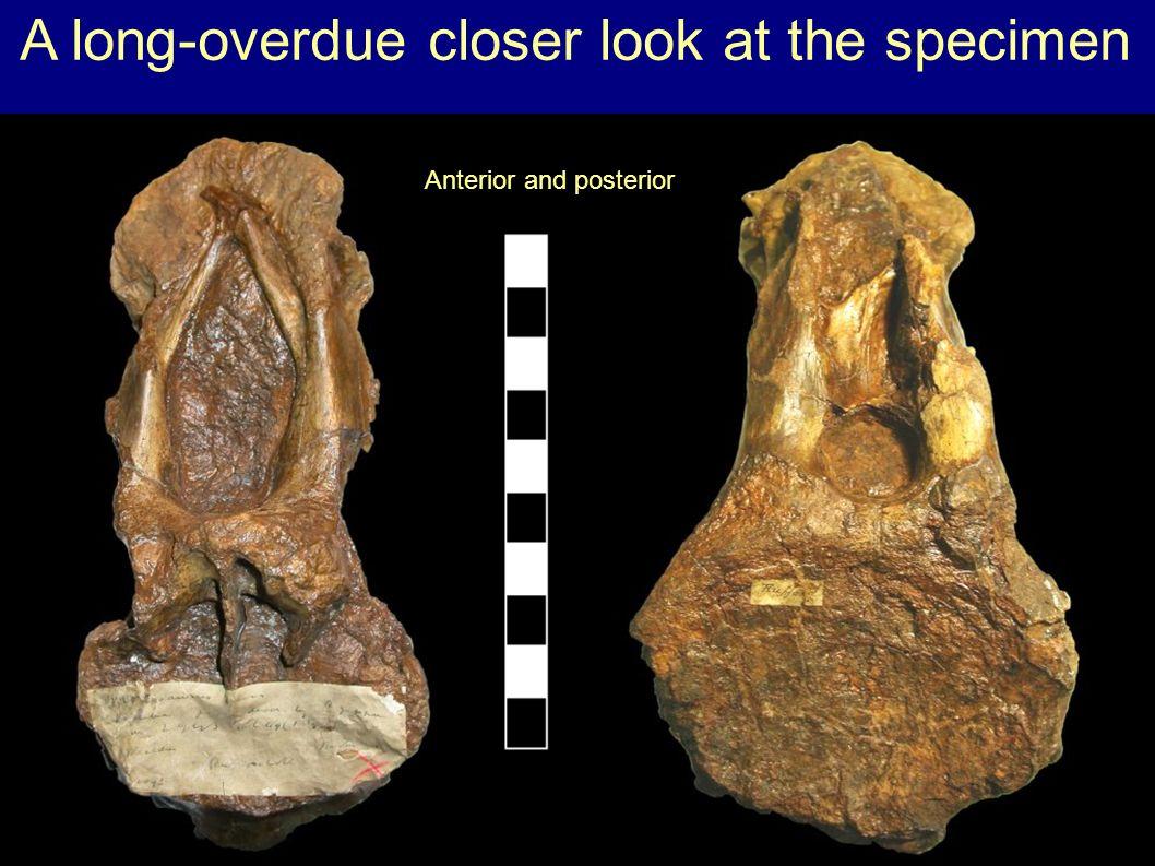 Sauropod diversity goes nuts.