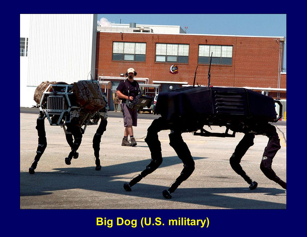 Big Dog (U.S. military)