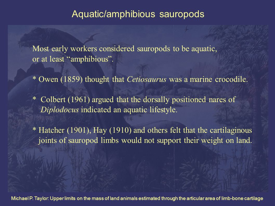 Michael P. Taylor: Upper limits on the mass of land animals estimated through the articular area of limb-bone cartilage Aquatic/amphibious sauropods M