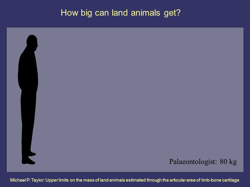 Michael P. Taylor: Upper limits on the mass of land animals estimated through the articular area of limb-bone cartilage How big can land animals get?