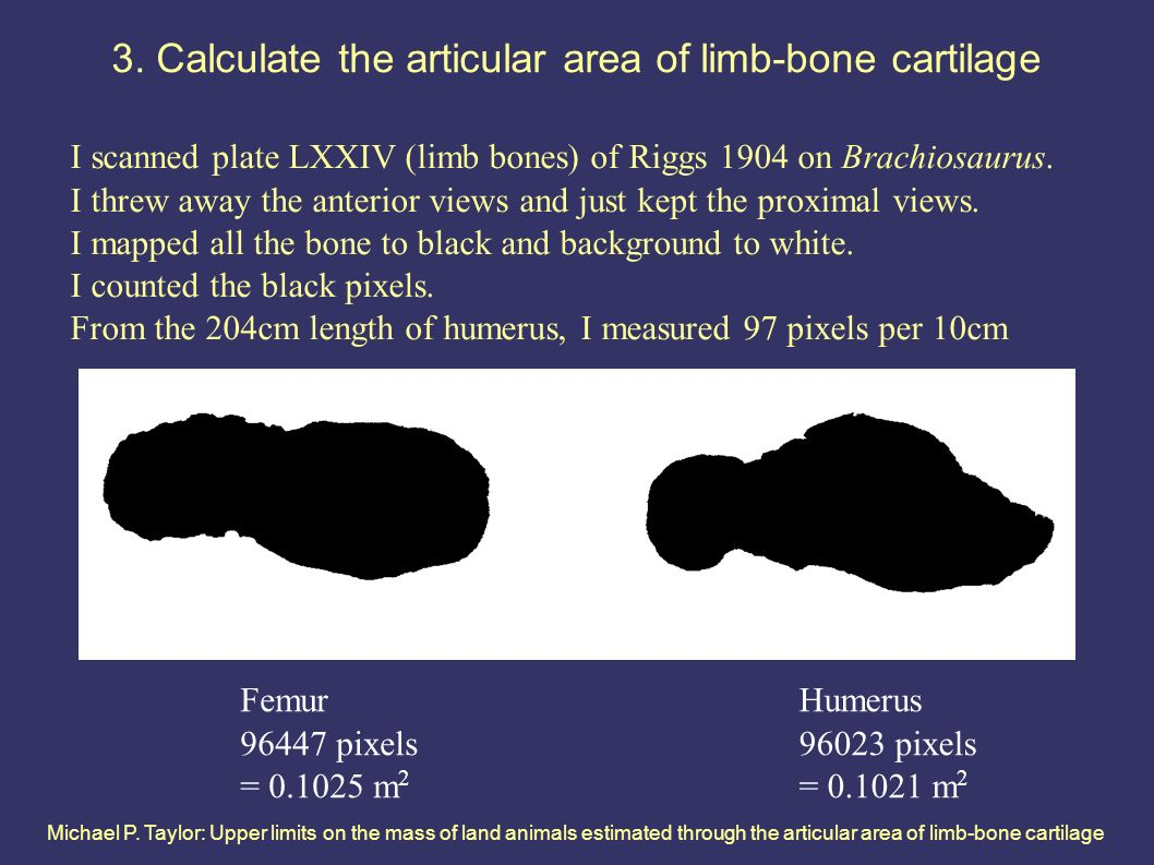 Michael P. Taylor: Upper limits on the mass of land animals estimated through the articular area of limb-bone cartilage 3. Calculate the articular are