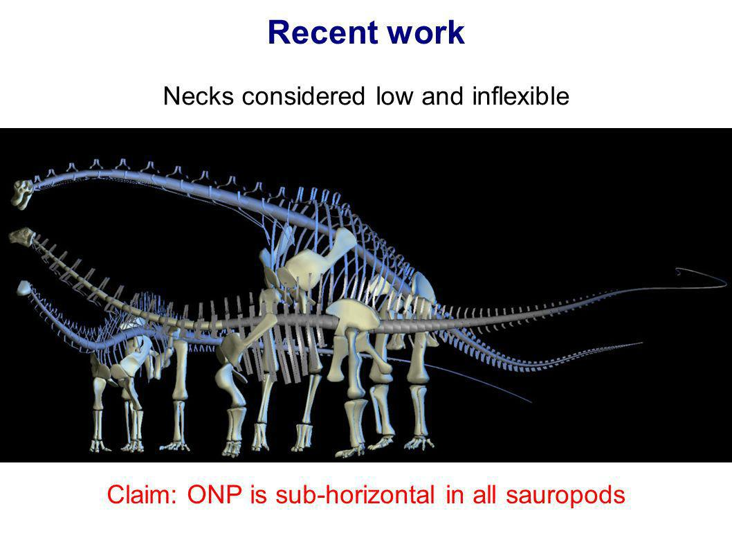 Recent work Necks considered low and inflexible Claim: ONP is sub-horizontal in all sauropods