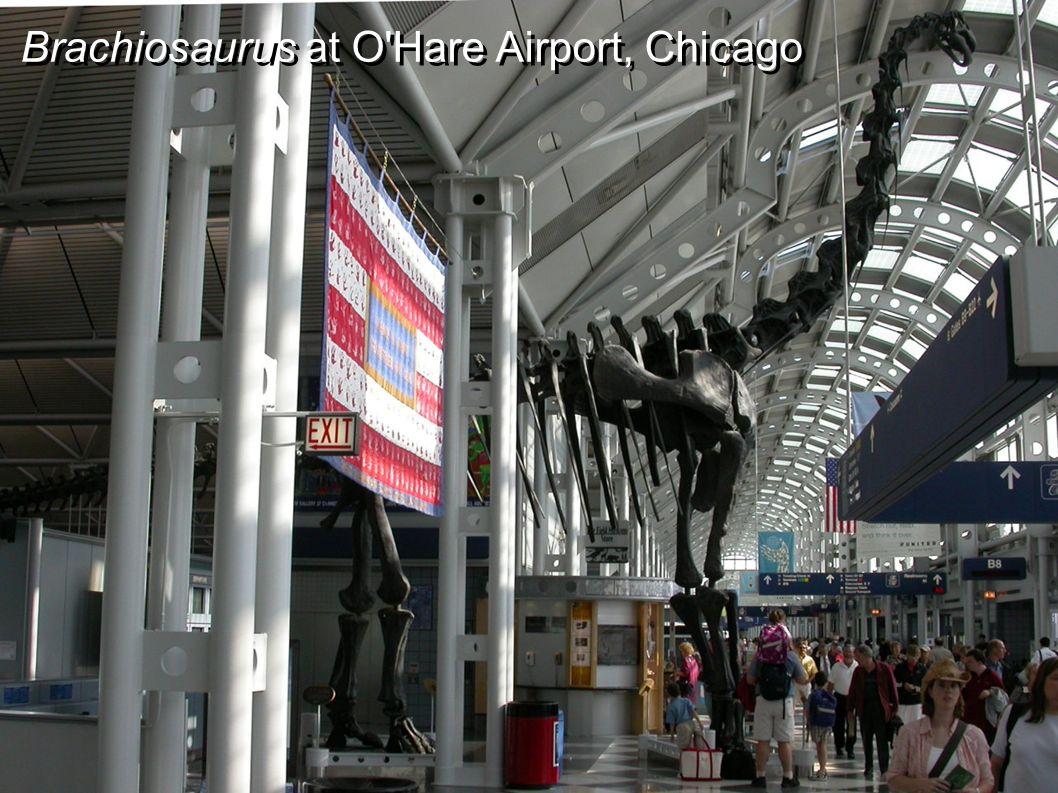 Brachiosaurus at O'Hare Airport, Chicago