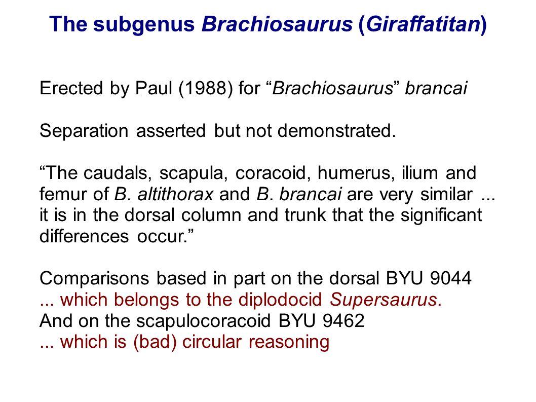 The subgenus Brachiosaurus (Giraffatitan) Erected by Paul (1988) for Brachiosaurus brancai Separation asserted but not demonstrated. The caudals, scap