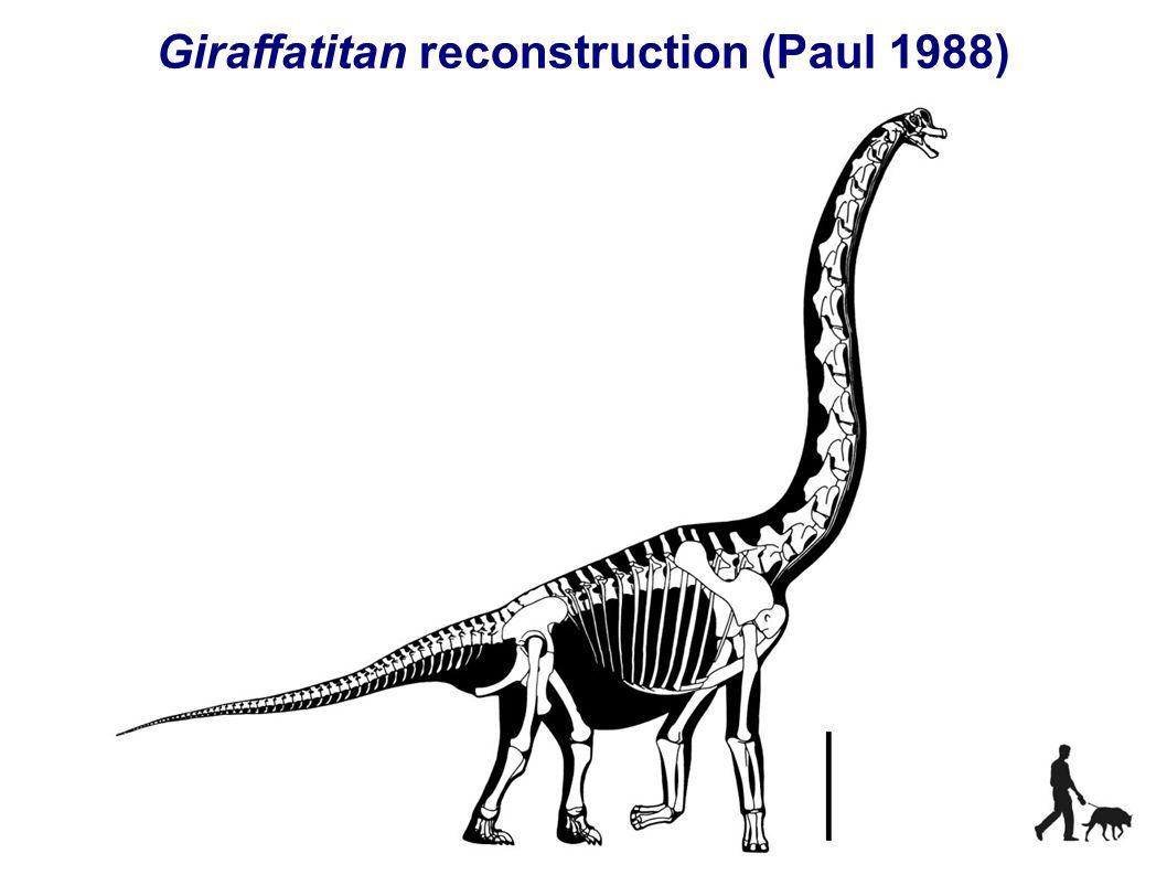 Giraffatitan reconstruction (Paul 1988)
