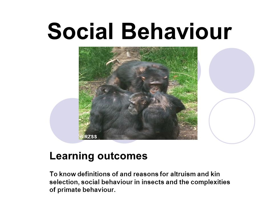 Social Behaviour Learning outcomes To know definitions of and reasons for altruism and kin selection, social behaviour in insects and the complexities