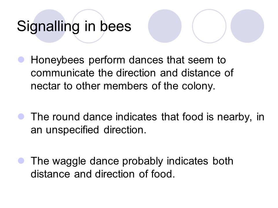 Signalling in bees Honeybees perform dances that seem to communicate the direction and distance of nectar to other members of the colony. The round da