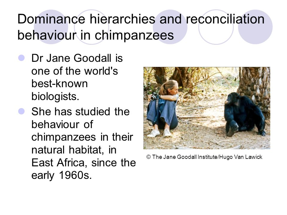 Dominance hierarchies and reconciliation behaviour in chimpanzees Dr Jane Goodall is one of the world's best-known biologists. She has studied the beh