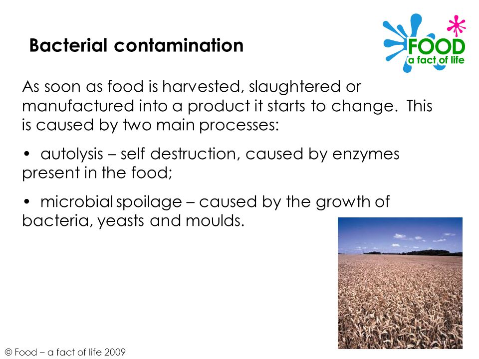 © Food – a fact of life 2009 Bacterial contamination As soon as food is harvested, slaughtered or manufactured into a product it starts to change. Thi
