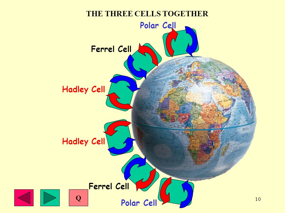 10 THE THREE CELLS TOGETHER Ferrel Cell Polar Cell Hadley Cell Polar Cell Ferrel Cell Hadley Cell Q
