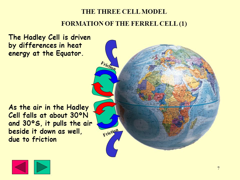 7 THE THREE CELL MODEL FORMATION OF THE FERREL CELL (1) The Hadley Cell is driven by differences in heat energy at the Equator. As the air in the Hadl
