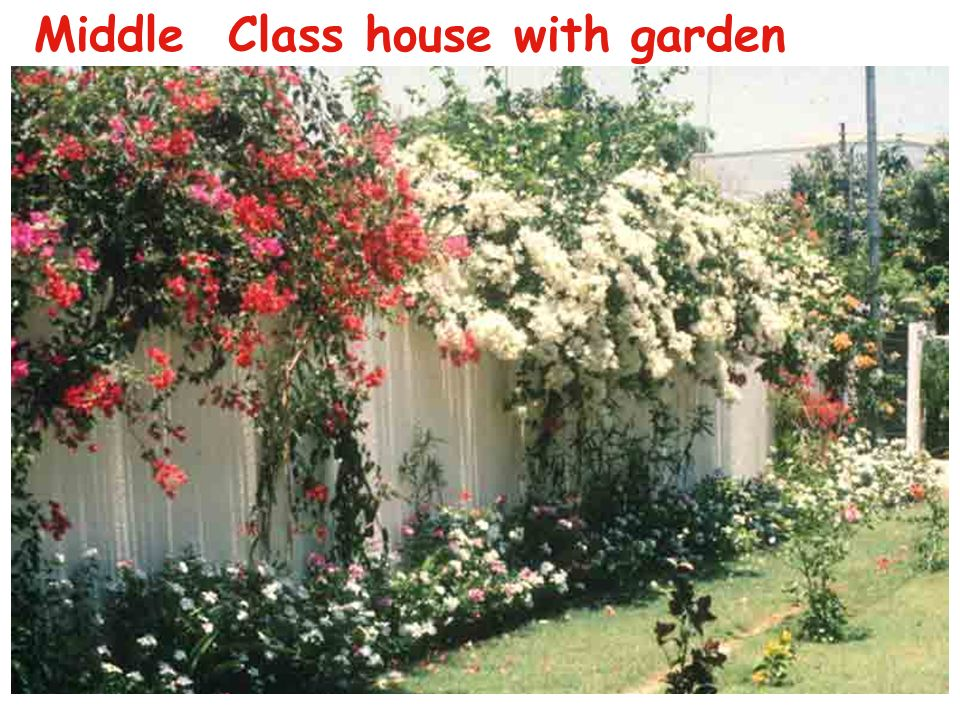 Middle Class house with garden