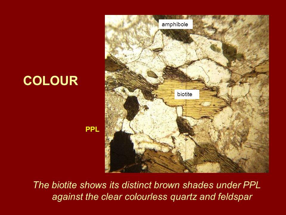 The biotite shows its distinct brown shades under PPL against the clear colourless quartz and feldspar COLOUR PPL biotite amphibole