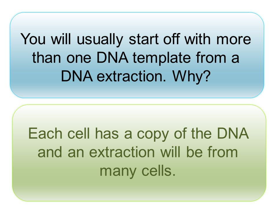 You will usually start off with more than one DNA template from a DNA extraction. Why? Each cell has a copy of the DNA and an extraction will be from