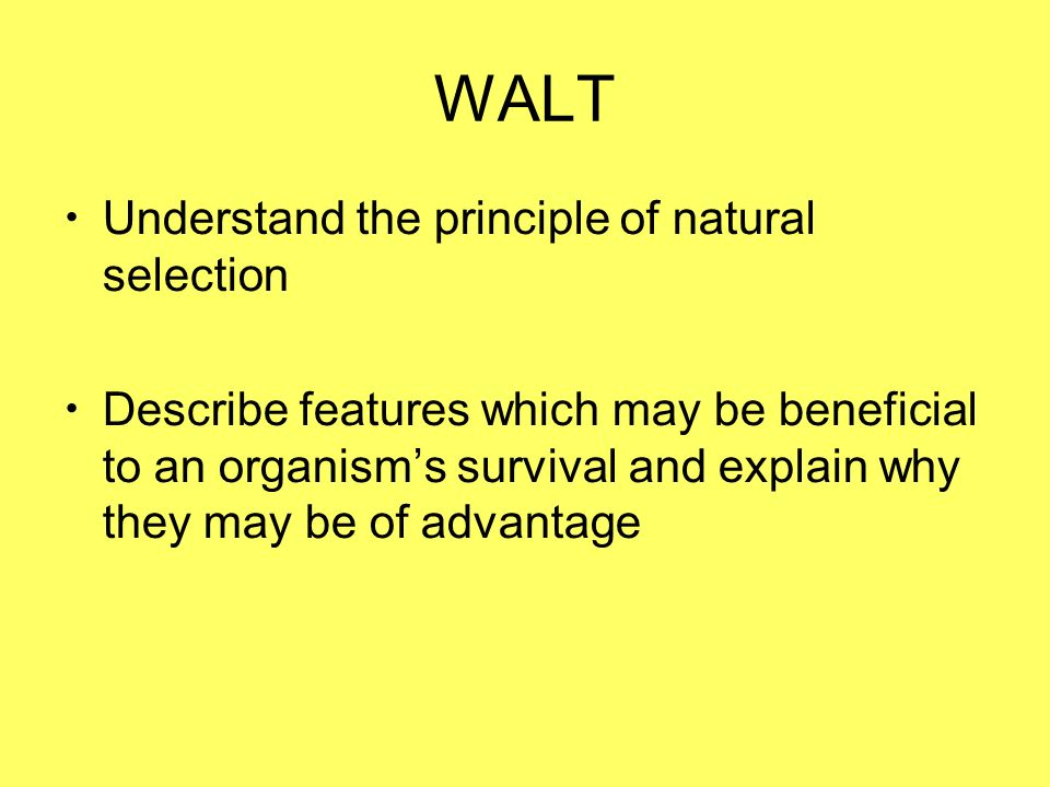 WALT Understand the principle of natural selection Describe features which may be beneficial to an organisms survival and explain why they may be of advantage