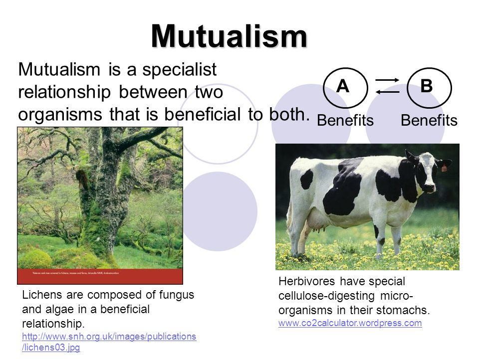 Mutualism Benefits AB Mutualism is a specialist relationship between two organisms that is beneficial to both. Herbivores have special cellulose-diges