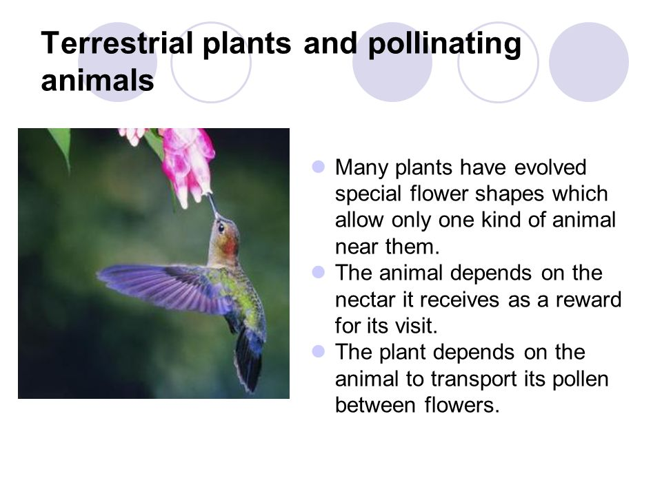 Terrestrial plants and pollinating animals Many plants have evolved special flower shapes which allow only one kind of animal near them. The animal de