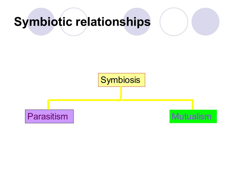Symbiosis Symbiosis is the close relationship between two different species, eg the relationship between nitrogen-fixing soil bacteria (Rhizobia) and leguminous plant roots (peas, beans and clover).