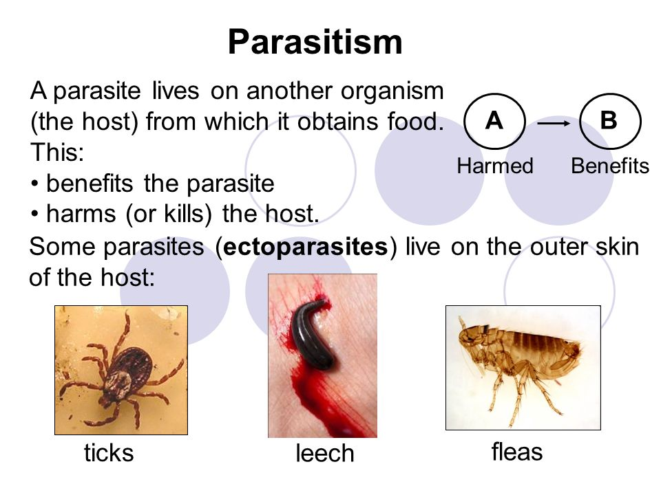 Parasitism Harmed AB Benefits A parasite lives on another organism (the host) from which it obtains food. This: benefits the parasite harms (or kills)