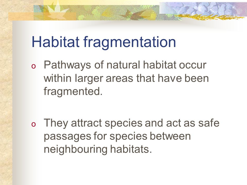 Habitat fragmentation o Pathways of natural habitat occur within larger areas that have been fragmented. o They attract species and act as safe passag
