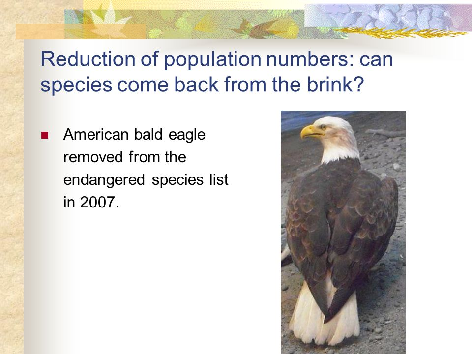 Reduction of population numbers: can species come back from the brink? American bald eagle removed from the endangered species list in 2007.