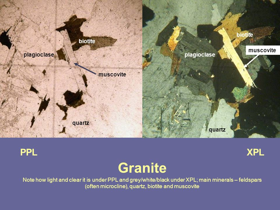 PPL XPL Granite Note how light and clear it is under PPL and grey/white/black under XPL; main minerals – feldspars (often microcline), quartz, biotite
