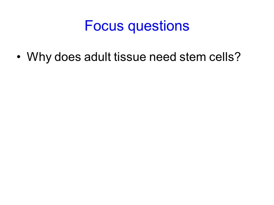 Focus questions Why does adult tissue need stem cells?