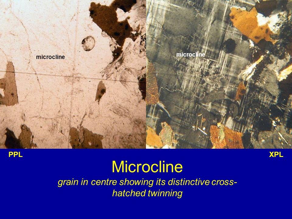 Microcline grain in centre showing its distinctive cross- hatched twinning XPLPPL microcline