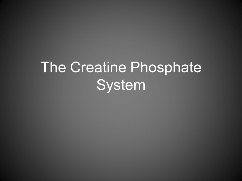 The Creatine Phosphate System