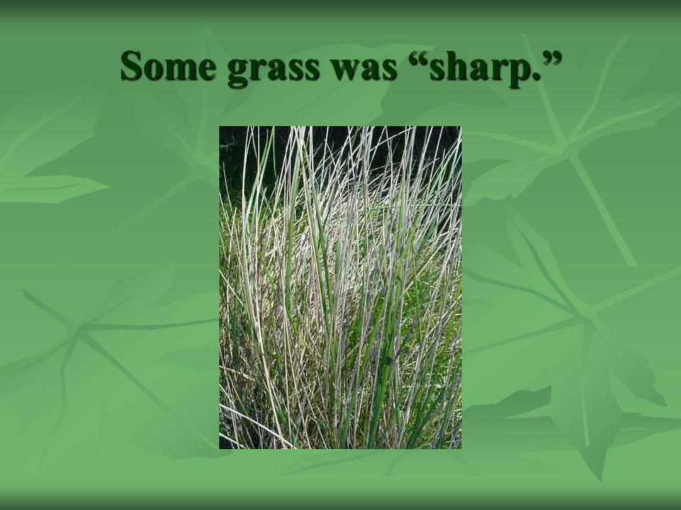 Some grass was sharp.