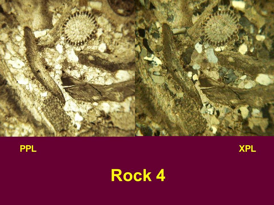 PPLXPL Rock 4