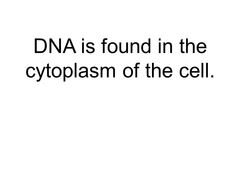 DNA is found in the cytoplasm of the cell.