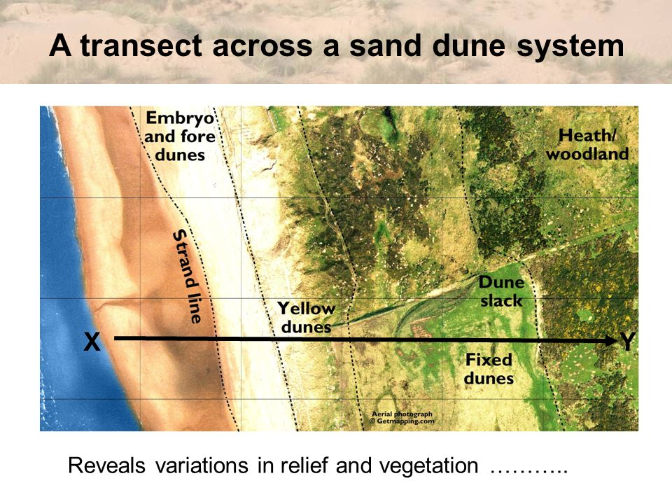 A transect across a sand dune system XY Reveals variations in relief and vegetation ………..