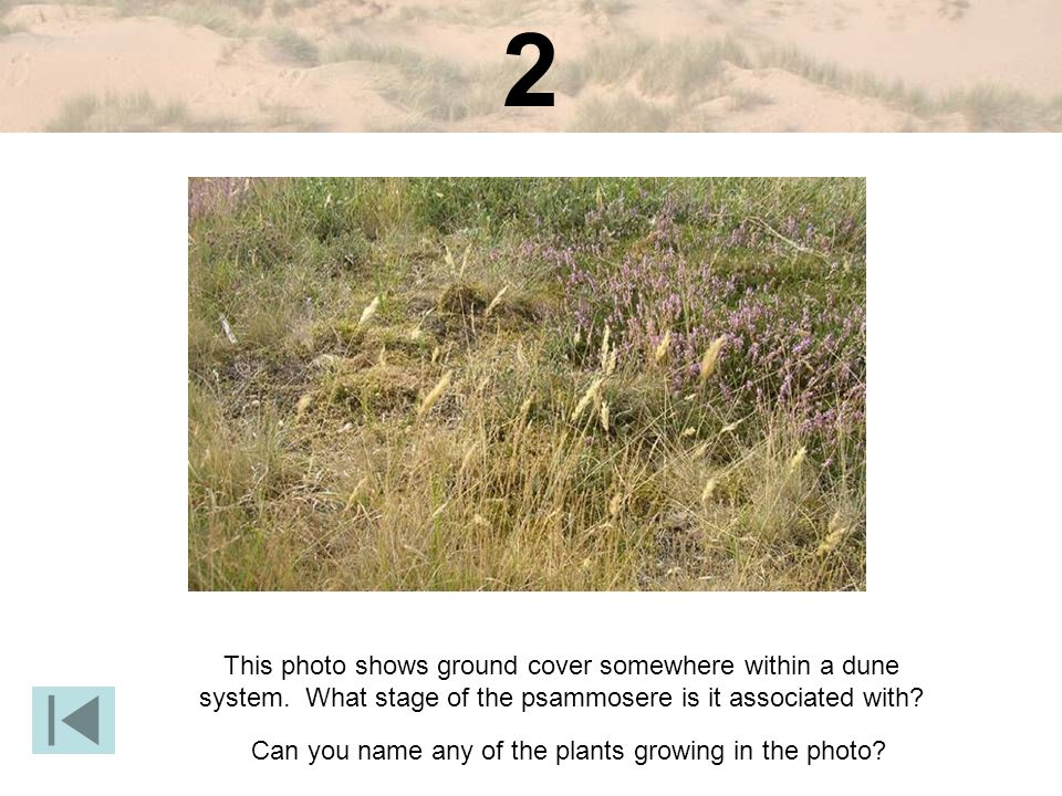 2 This photo shows ground cover somewhere within a dune system.