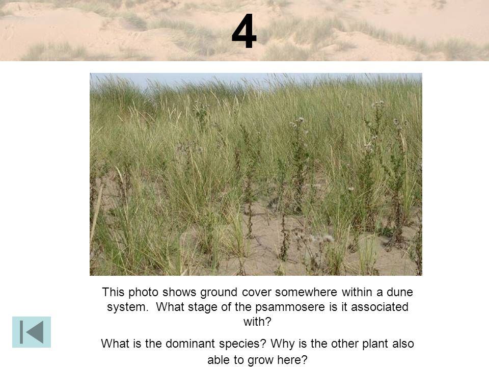 4 This photo shows ground cover somewhere within a dune system.