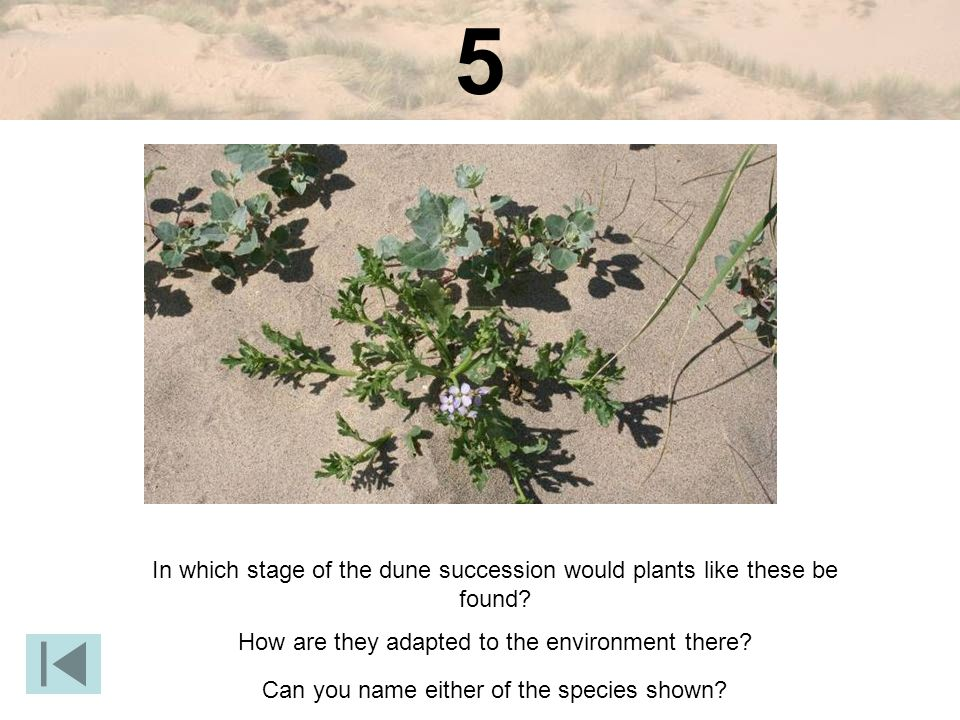 5 In which stage of the dune succession would plants like these be found.